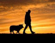 Ecco alcuni consigli su come comportarsi con il proprio cane in montanga