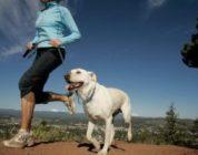 Le 10 regole per correre con il tuo cane